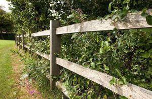 Fencing Grade European Oak In Use. Project by EC Forest Ltd.